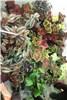 گزارش تصویری نمایشگاه گل و گیاه قم